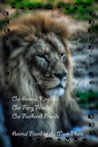 animal-friend-of-the-week-challenge-logo-e1461007491258