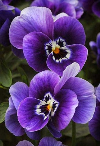 e537ac11fee3fd421bfa12801223d82c--planting-flowers-amazing-flowers