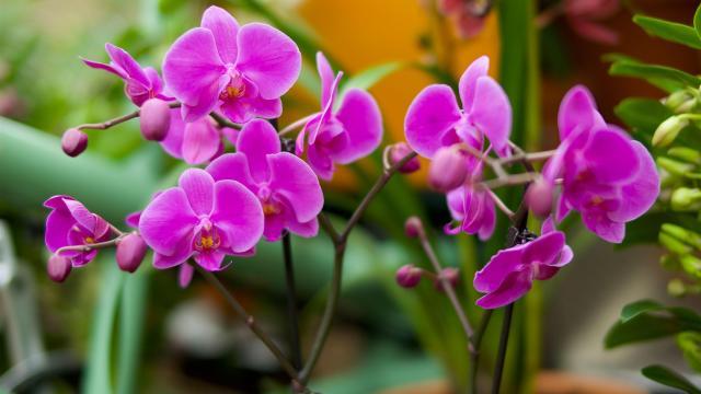 orchids-01