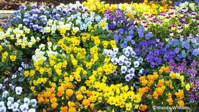 springgreen61.jpg